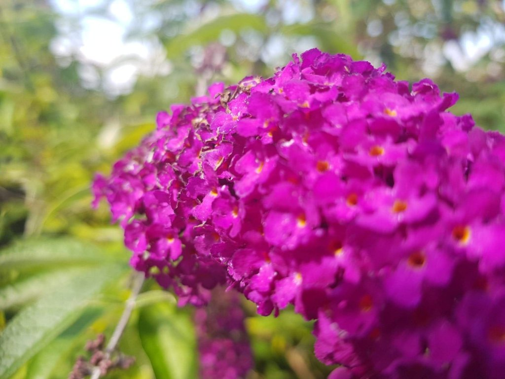 Purple flower close up blurred but getting more focused